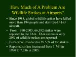 how much of a problem are wildlife strikes at airports