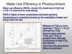 water use efficiency in photosynthesis