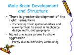 male brain development and structure
