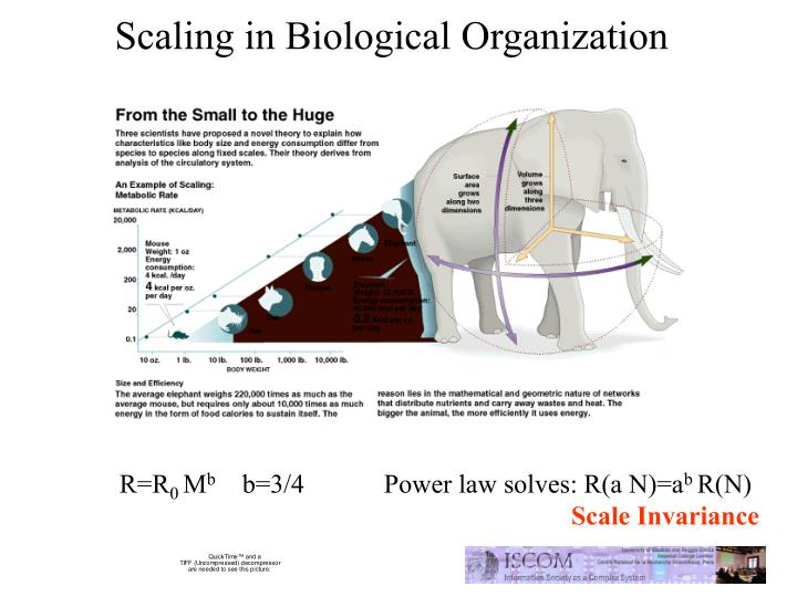 Scaling in Biological Organization