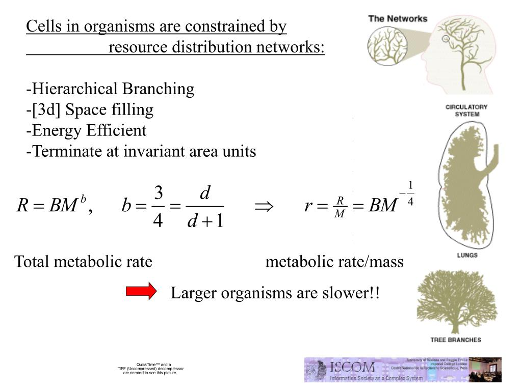 Cells in organisms are constrained by        resource distribution networks:
