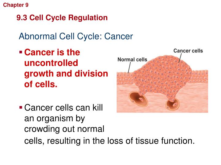 Cancer cells can kill an organism by crowding out normal