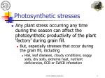 photosynthetic stresses