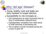 why old age disease