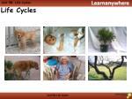 unit 5b life cycles