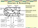 structure remodeling