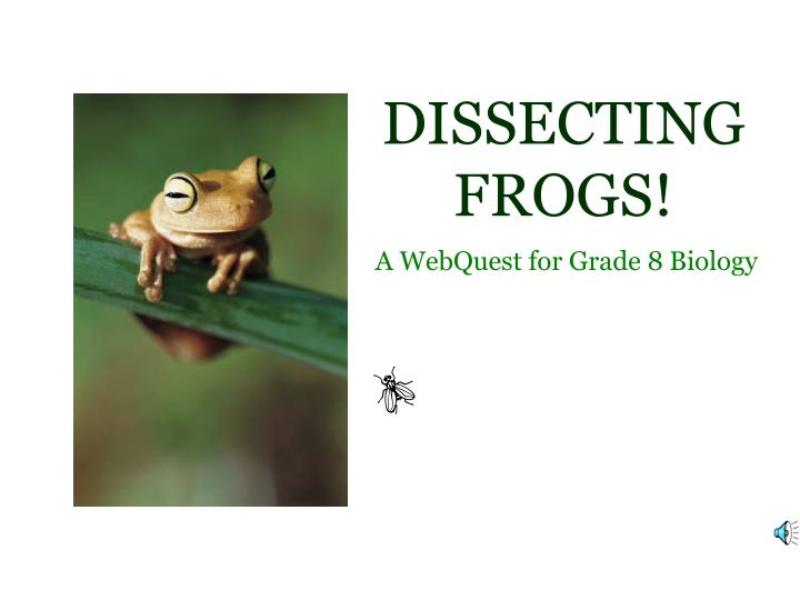 dissecting frogs n.