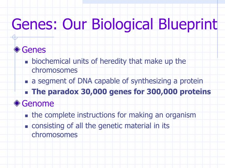 Genes our biological blueprint3