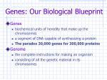 genes our biological blueprint3