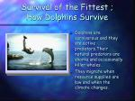 survival of the fittest how dolphins survive