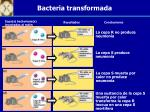 bacteria transformada