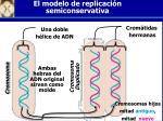 el modelo de replicaci n semiconservativa