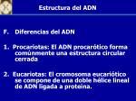 estructura del adn2