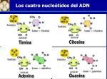 los cuatro nucle tidos del adn