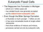 eukaryotic fossil cells