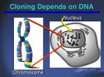 cloning depends on dna