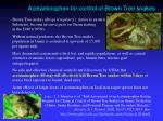 acetaminophen for control of brown tree snakes