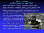 animal euthanasia and secondary poisoning of wildlife