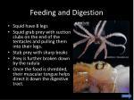 feeding and digestion