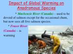 impact of global warming on anadromous species