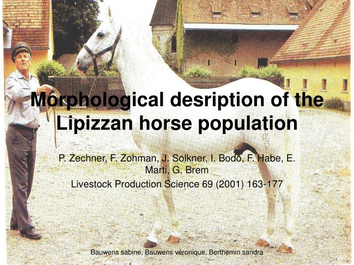morphological desription of the lipizzan horse population n.