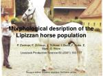 morphological desription of the lipizzan horse population