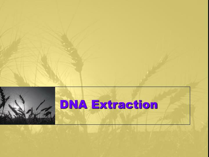 dna extraction n.
