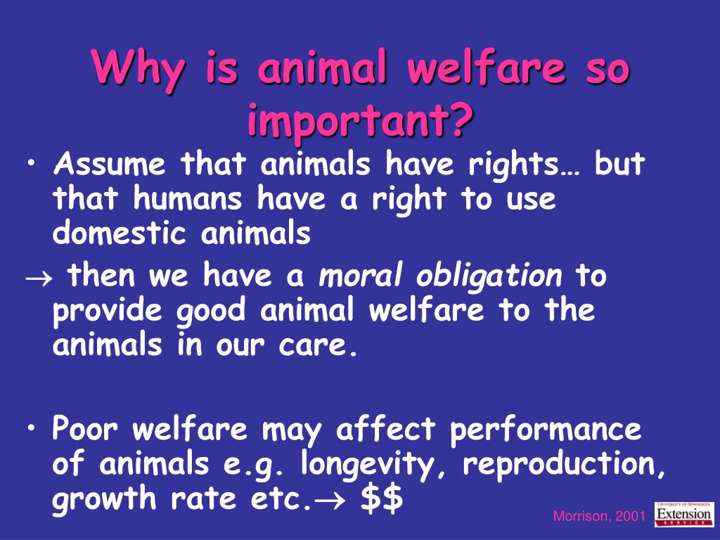 Why is animal welfare so important?