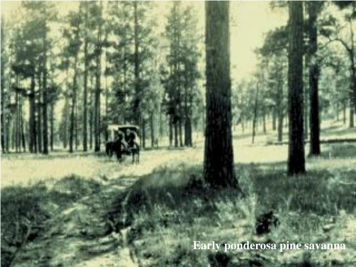 Early ponderosa pine savanna