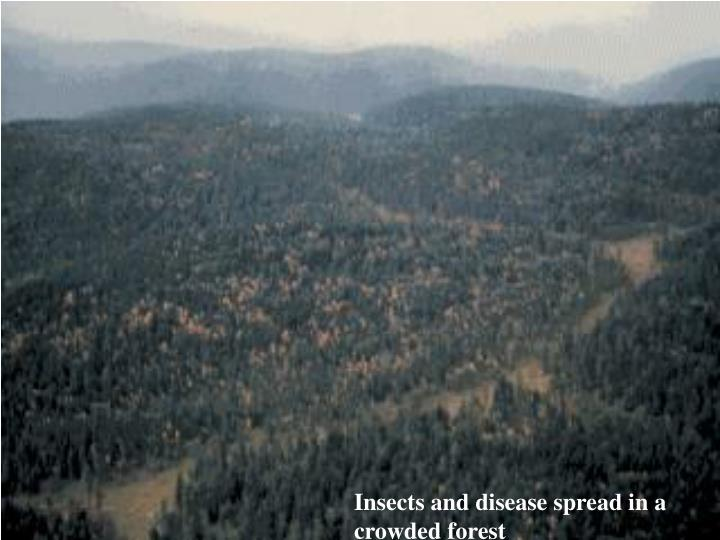 Insects and disease spread in a