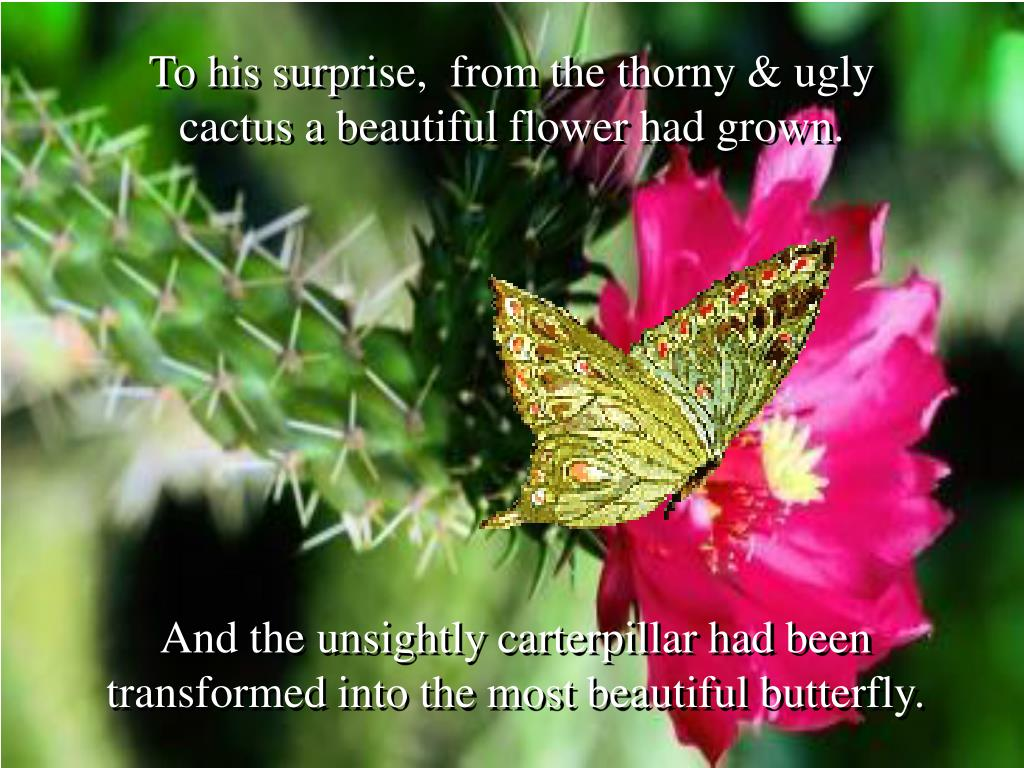 To his surprise,  from the thorny & ugly cactus a beautiful flower had grown.