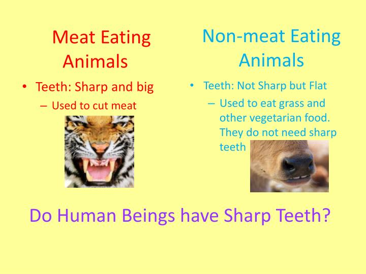 Meat eating animals1