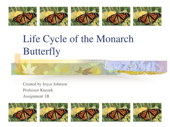 life cycle of the monarch butterfly n.