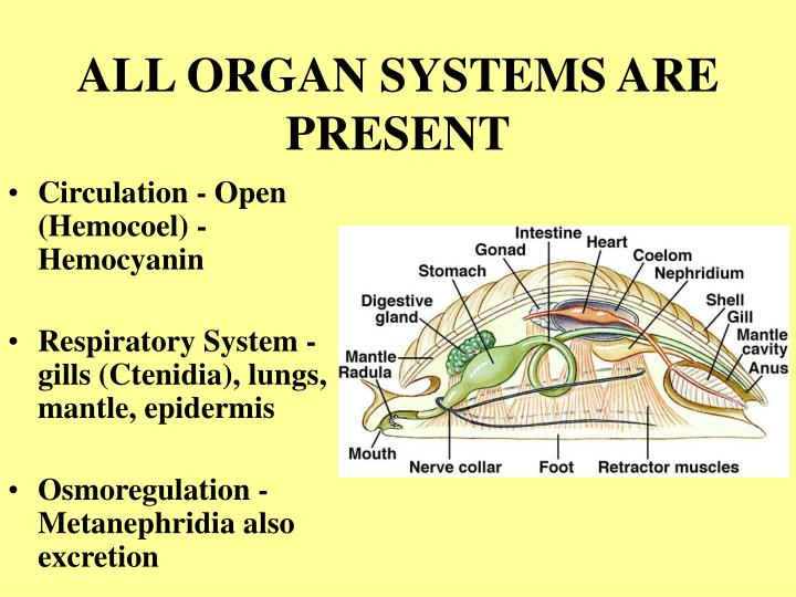 ALL ORGAN SYSTEMS ARE PRESENT