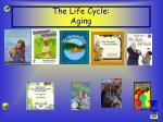 the life cycle aging