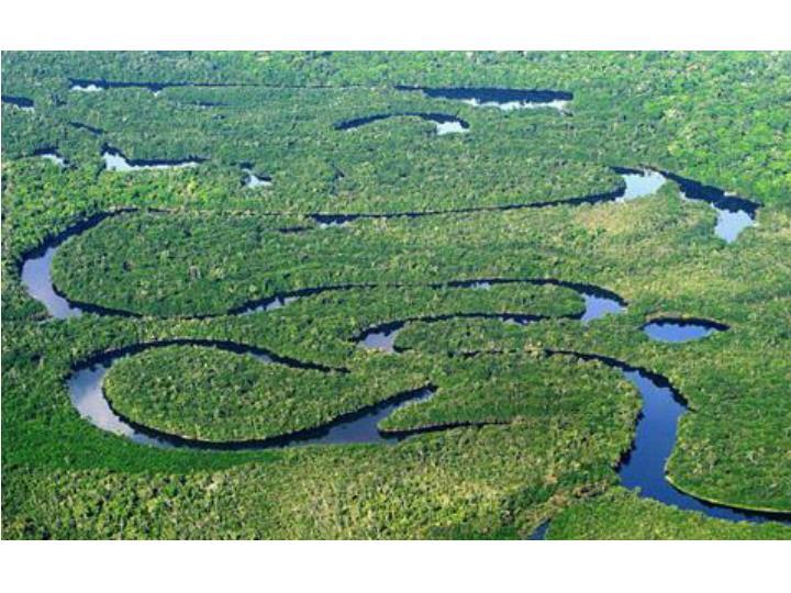 Amazonas rainforest