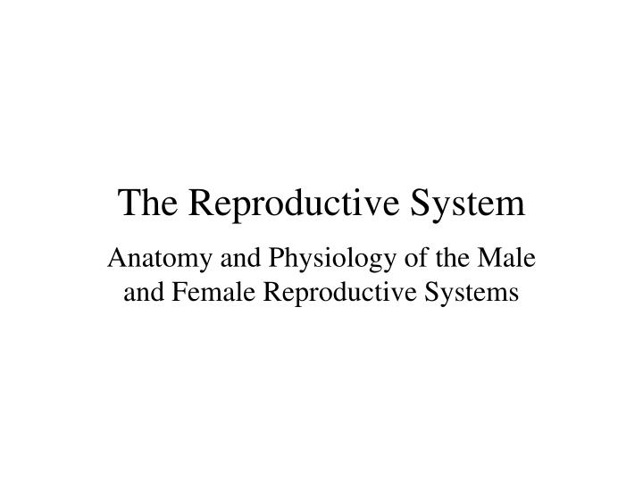 the reproductive system n.