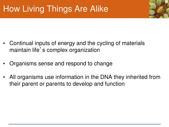 How Living Things Are Alike