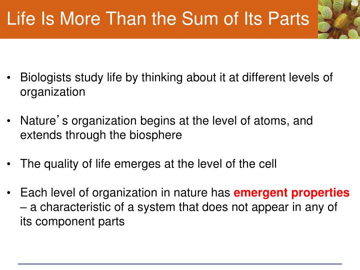 Life Is More Than the Sum of Its Parts