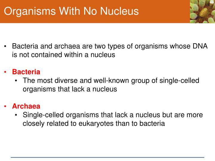 Organisms With No Nucleus