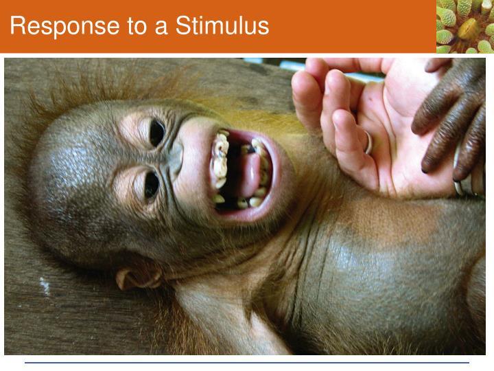 Response to a Stimulus