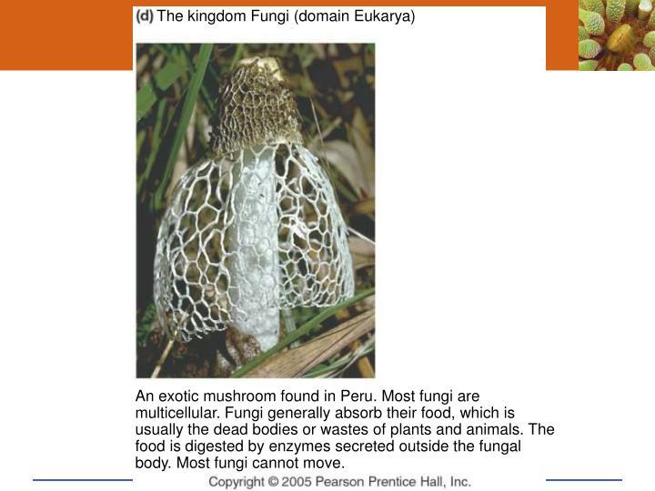 The kingdom Fungi (domain Eukarya)
