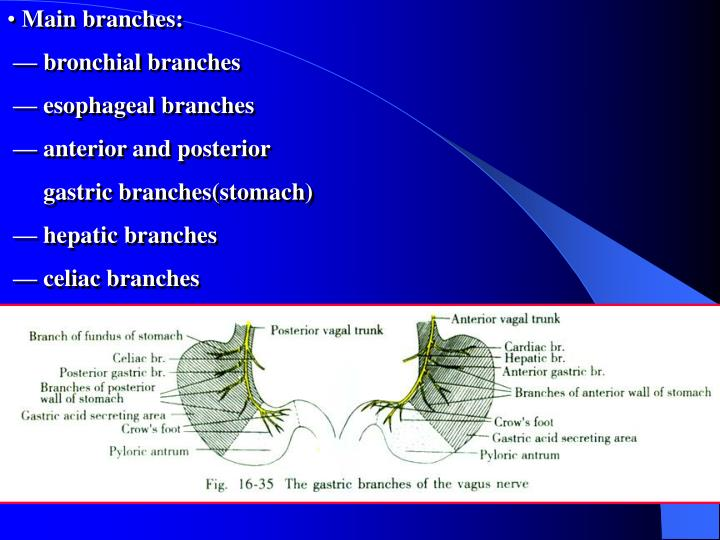 Main branches: