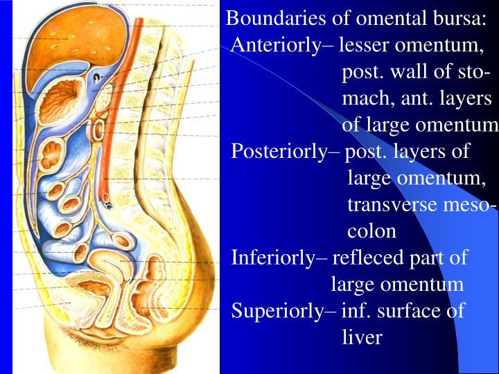 Boundaries of omental bursa: