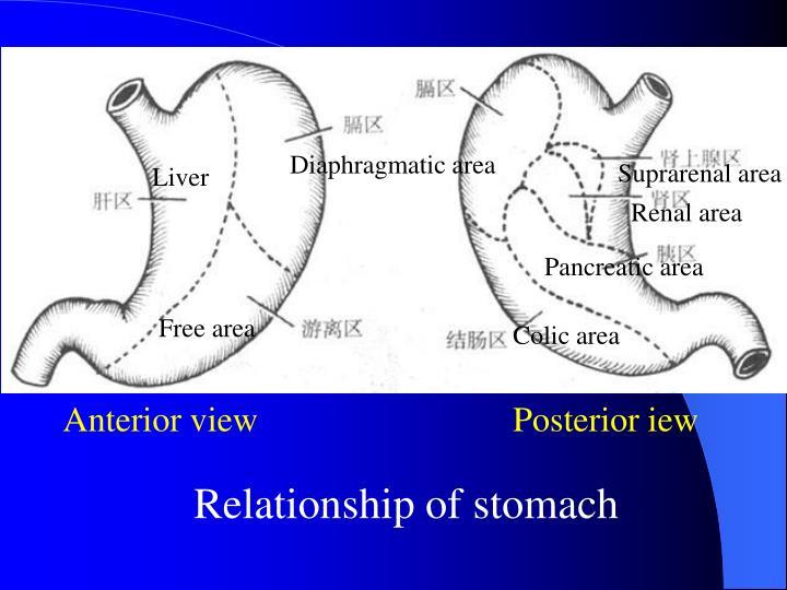 Diaphragmatic area