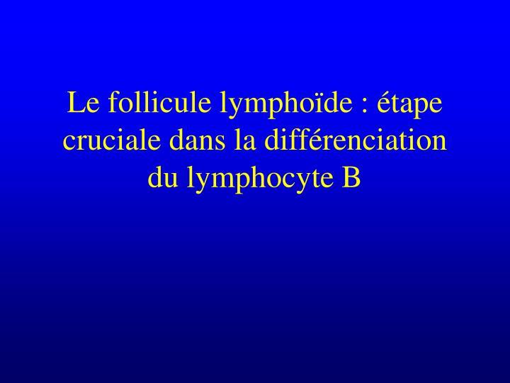 Le follicule lympho de tape cruciale dans la diff renciation du lymphocyte b