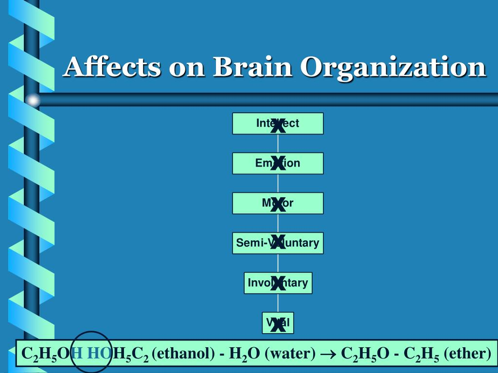 Affects on Brain Organization