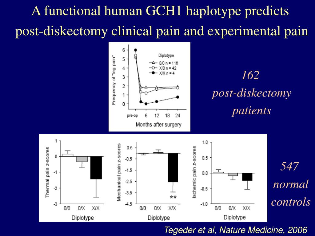 A functional human GCH1 haplotype predicts