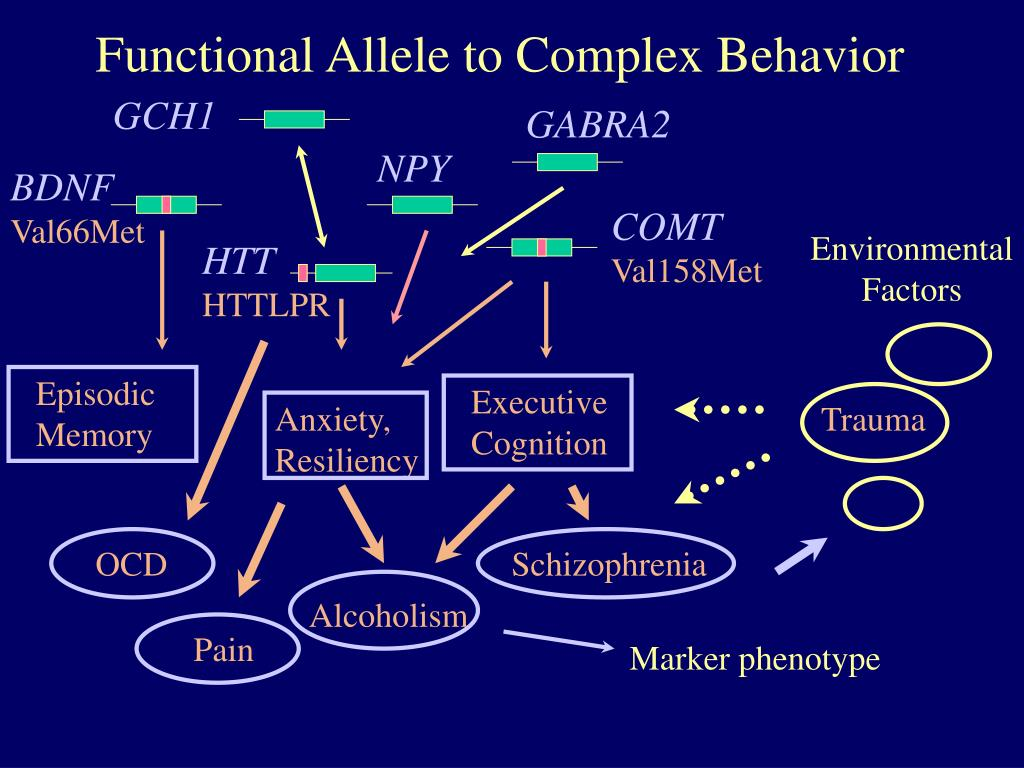 Functional Allele to Complex Behavior