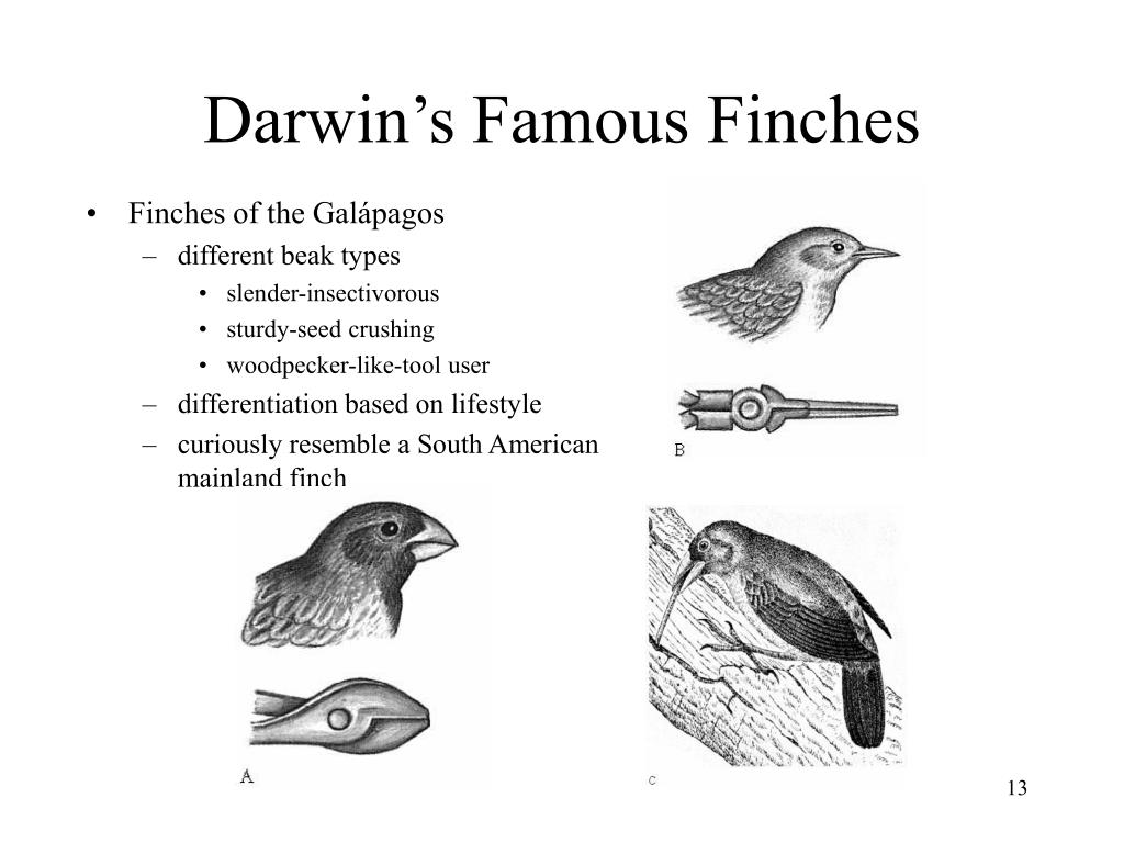Finches of the Galápagos